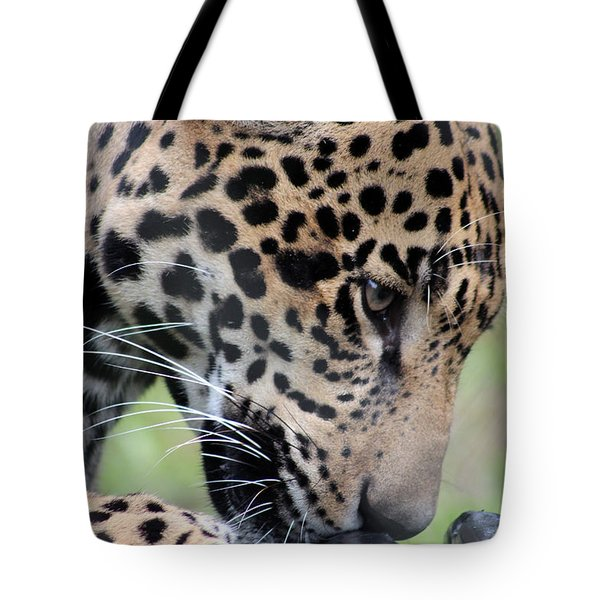 Jaguar And Toy Tote Bag