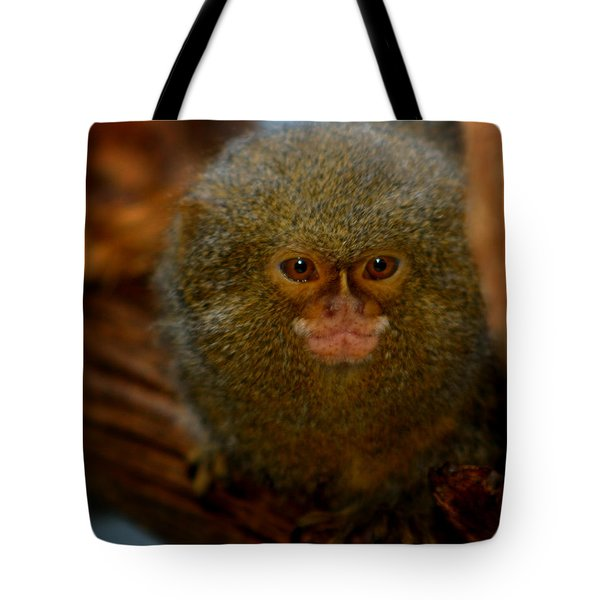 Pygmy Marmoset Tote Bag by Anthony Jones