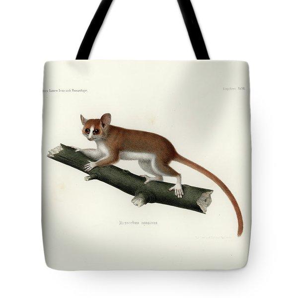 Pygmy Mouse Lemur Tote Bag