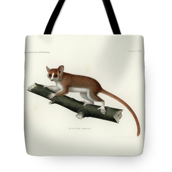 Pygmy Mouse Lemur Tote Bag