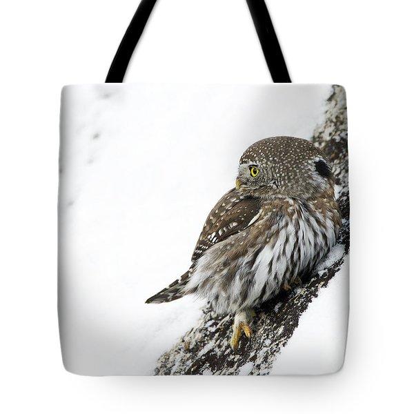 Pygmy Owl Tote Bag