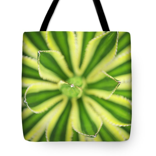Tote Bag featuring the photograph Quadricolor Agave Plant by Charmian Vistaunet