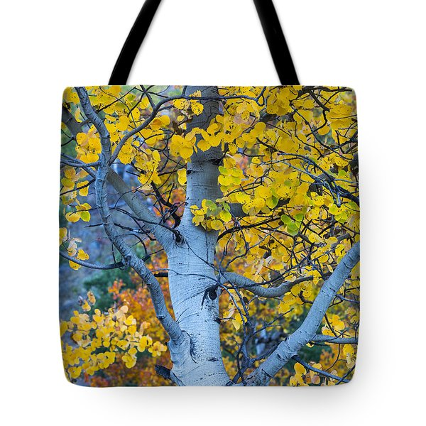 Quaking Aspen Tote Bag