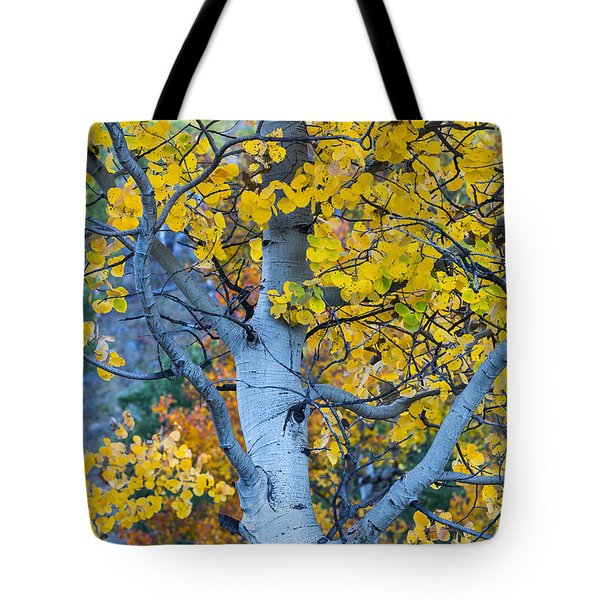 Quaking Aspen Tote Bag