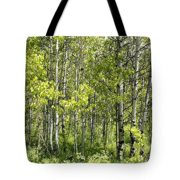 Quaking Aspens 2 Tote Bag by Cynthia Powell