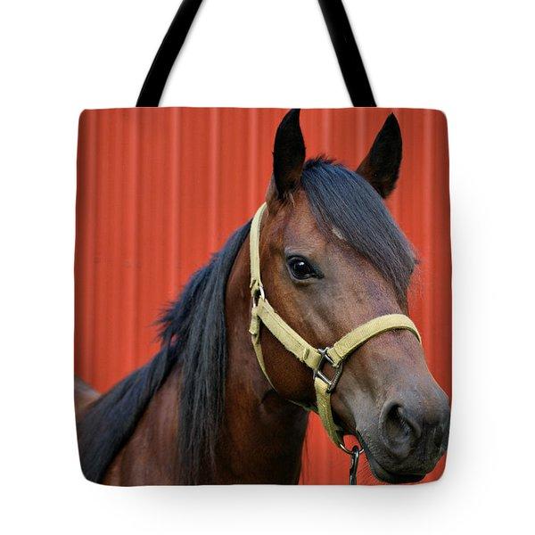 Quarter Horse Tote Bag by Sandy Keeton