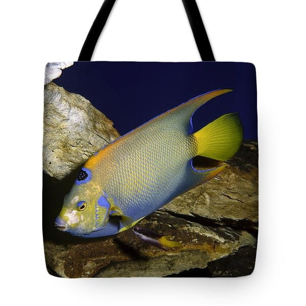 Queen Angelfish Tote Bag by Sally Weigand