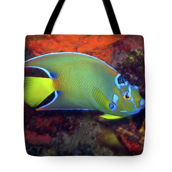 Queen Angelfish, U. S. Virgin Islands 2 Tote Bag