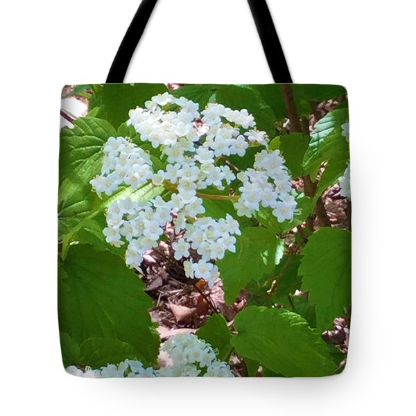 Queen Anne's Lace Tote Bag by Kay Gilley