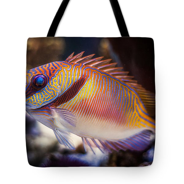 Rabbitfish Tote Bag