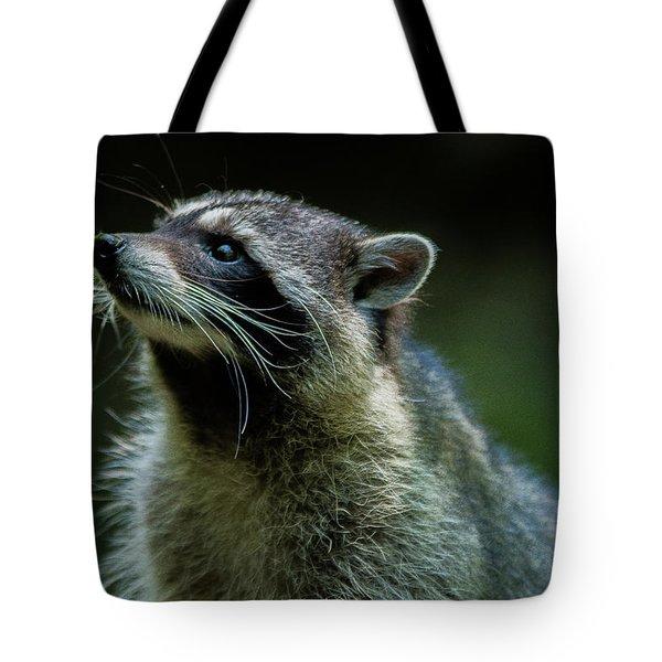 Raccoon 1 Tote Bag