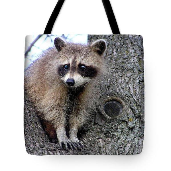 Raccoon Lookout Tote Bag