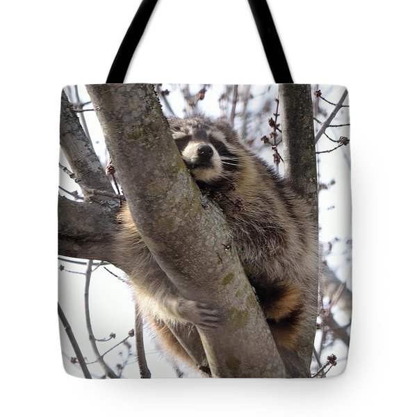 Afternoon Nap-raccoon Up A Tree  Tote Bag