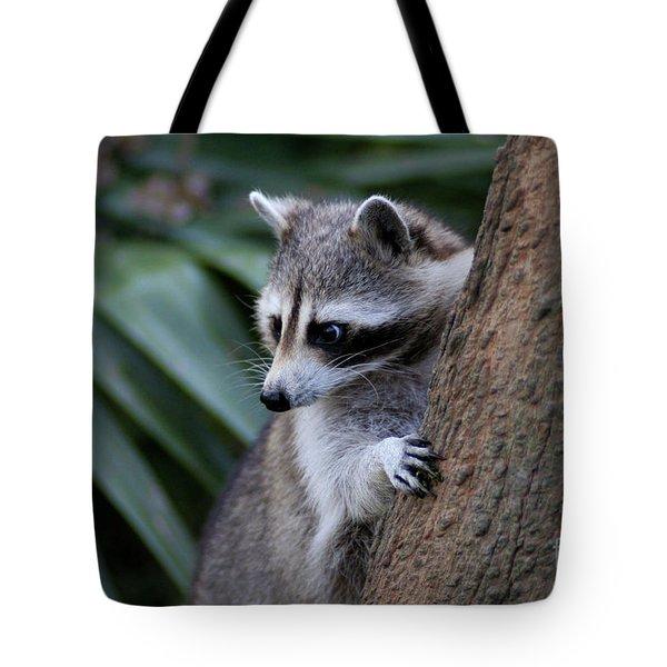 Raccoon Tote Bag by Scott Pellegrin