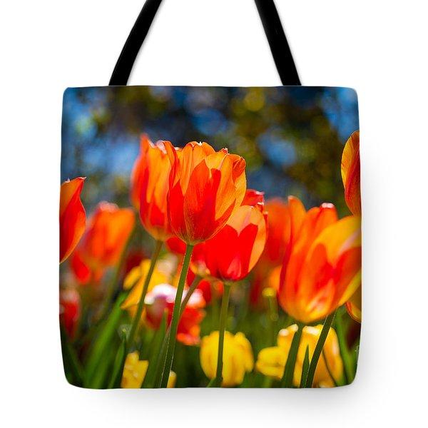 Radiant Tulips Tote Bag
