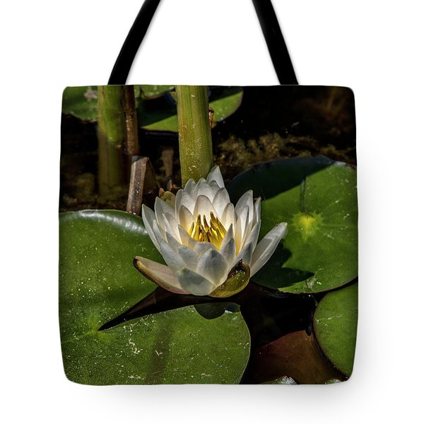 Radiant White Pond Lily  Tote Bag