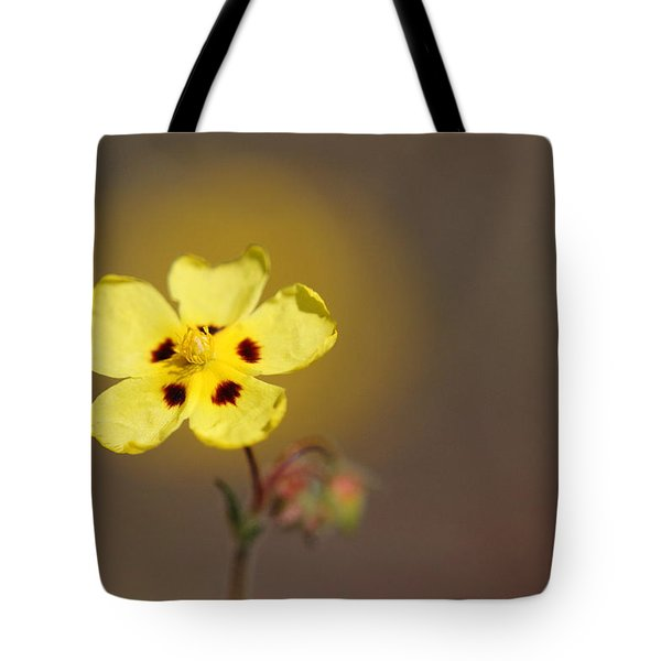 Tote Bag featuring the photograph Radiate by Richard Patmore