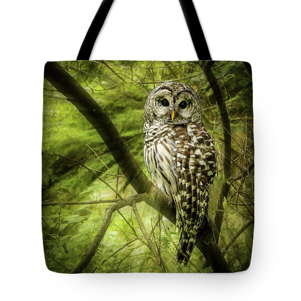 Radiating Barred Owl Tote Bag