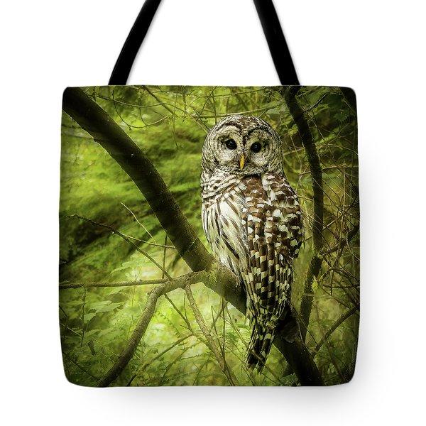 Radiating Barred Owl Tote Bag