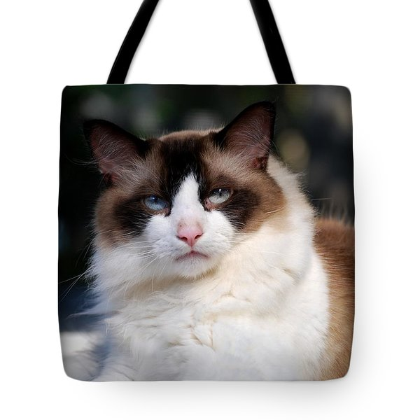 Rag Doll Alpha Pose 1 Tote Bag by Angela Murray