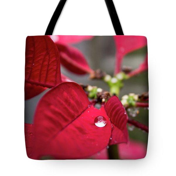 Rain Drop On A Poinsettia  Tote Bag
