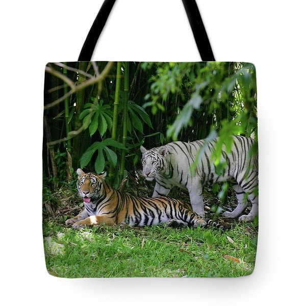 Tote Bag featuring the photograph Rain Forest Tigers by Anthony Jones