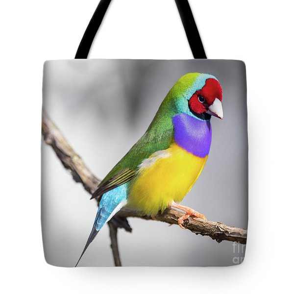 Rainbow Finch Tote Bag