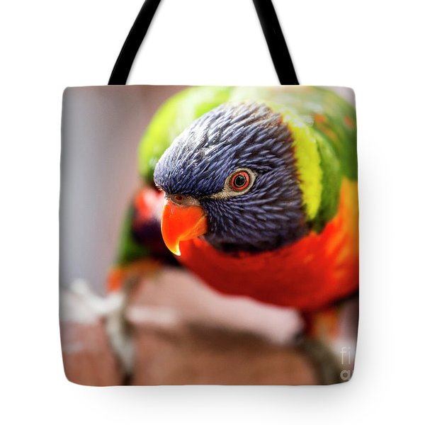 Rainbow Lorikeet Close Up Tote Bag