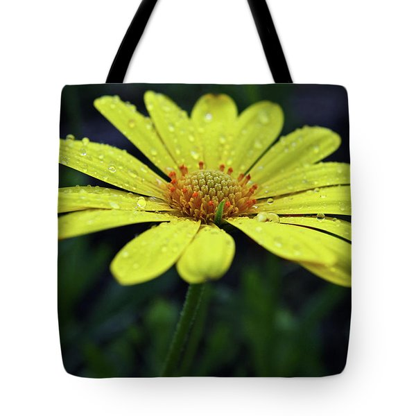 Tote Bag featuring the photograph Raindrops On Daisy by Judy Vincent
