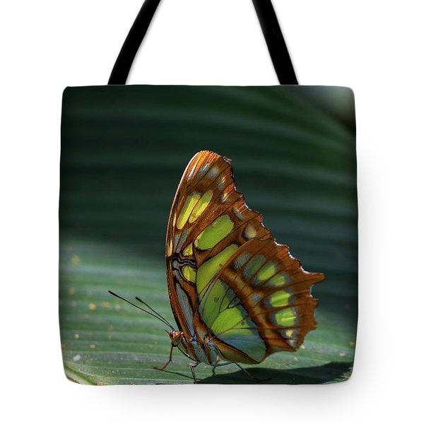Rainforest Butterfly Tote Bag
