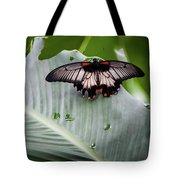 Tote Bag featuring the photograph Raining Wings by Karen Wiles