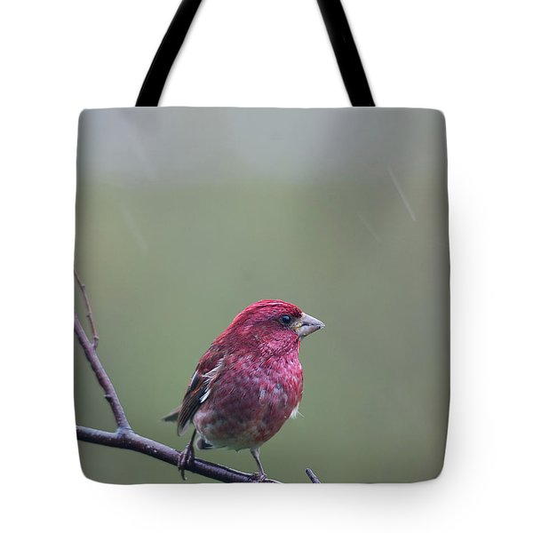 Tote Bag featuring the photograph Rainy Day Finch by Susan Capuano