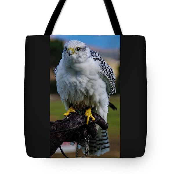 Tote Bag featuring the photograph Ramona Hawk 1 by Phyllis Spoor