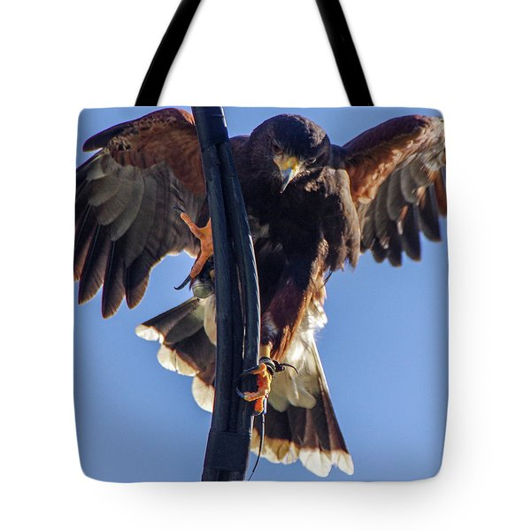 Tote Bag featuring the photograph Ramona Hawk 7 by Phyllis Spoor