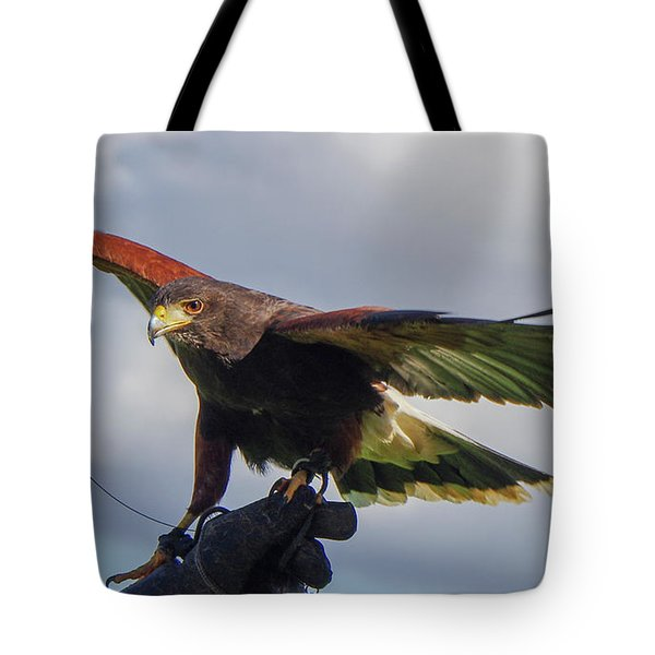 Tote Bag featuring the photograph Ramona Hawk Watch 3 by Phyllis Spoor
