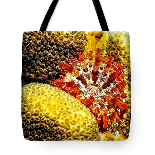 Rare Orange Tipped Corallimorph - Fire In The Sea Tote Bag