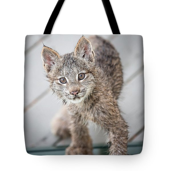 What Are You Tote Bag