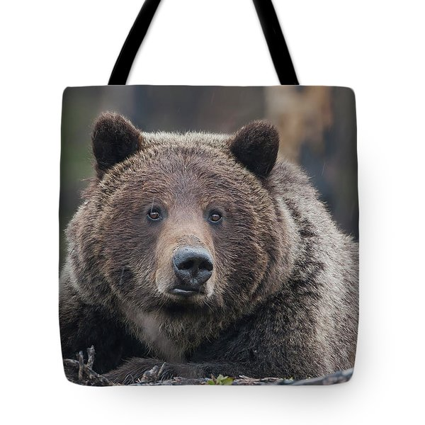 Raw, Rugged And Wild- Grizzly Tote Bag