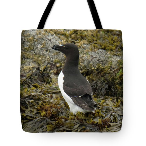Razorbill Tote Bag by Judd Nathan