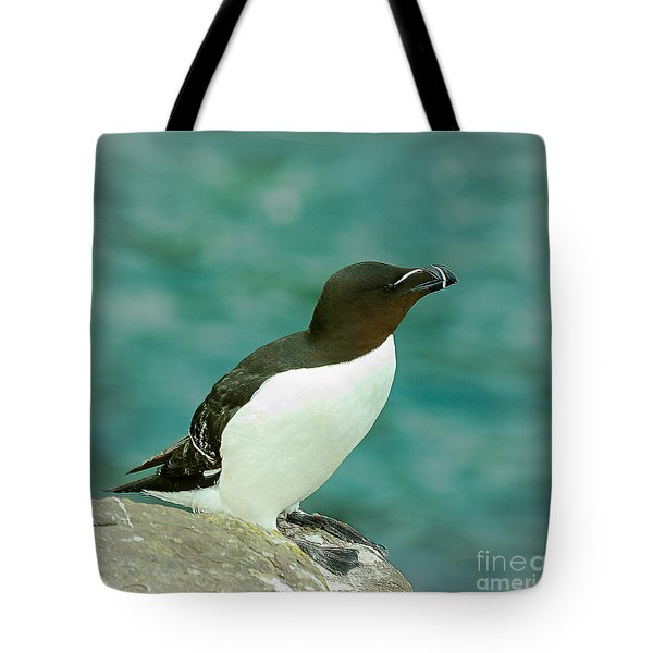 Razorbill Tote Bag by Nick Eagles