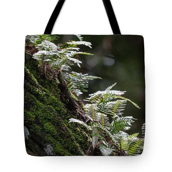 Reach For The Light Tote Bag