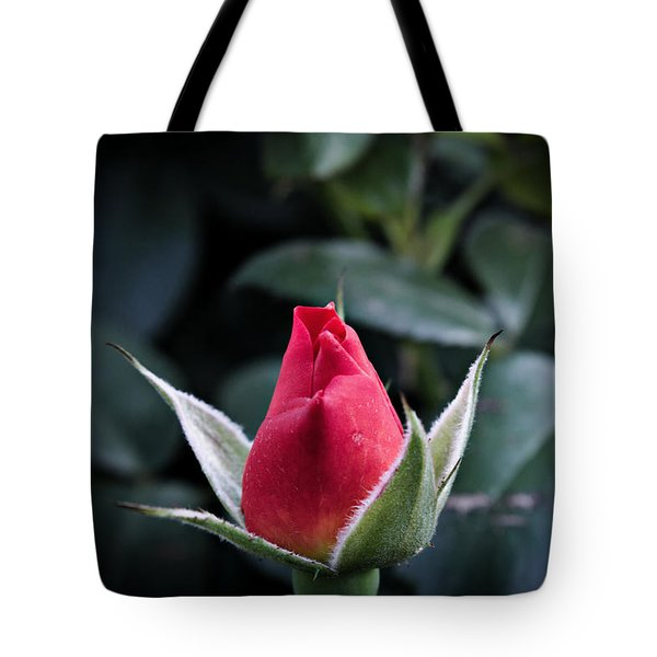 Tote Bag featuring the photograph Ready For It by Cendrine Marrouat