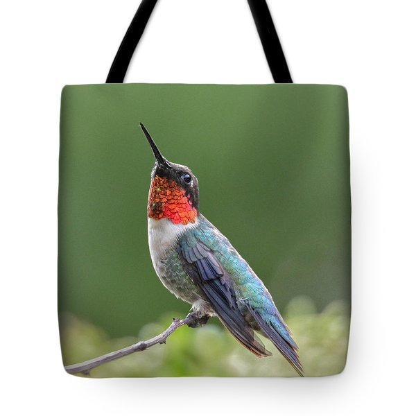 Ready To Go Tote Bag by Amy Porter