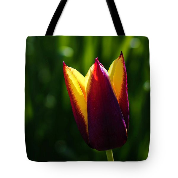 Tote Bag featuring the photograph Red And Yellow Tulip by Keith Smith