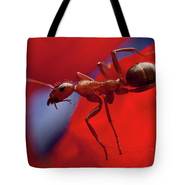 Tote Bag featuring the photograph Red Ant Macro by Jeff Folger