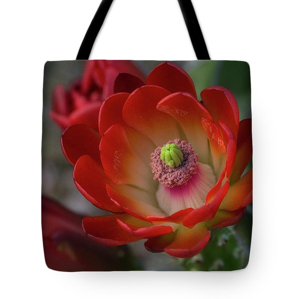 Tote Bag featuring the photograph Red Beauty  by Saija Lehtonen
