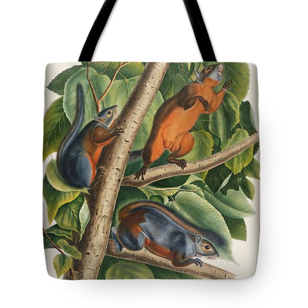 Red Bellied Squirrel  Tote Bag by John James Audubon