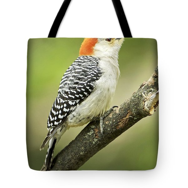 Red Bellied Woodpecker, Female On Tree Branch Tote Bag