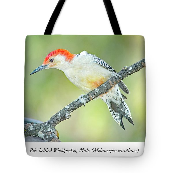 Red Bellied Woodpecker, Male Tote Bag
