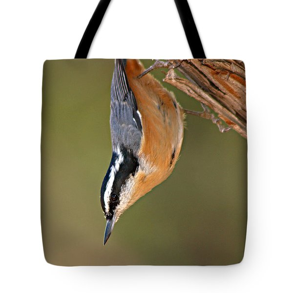 Tote Bag featuring the photograph Red-breasted Nuthatch Upside Down by Max Allen